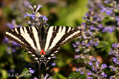 A butterfly at the National Arboretum - Washington, DC ... April 1, 2012 ... Photo by Rob Page III