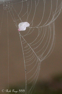 Spider webs - Washington, DC ... March 22, 2012 ... Photo by Rob Page III