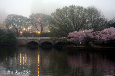 The Tidal Basin - Washington, DC ... March 22, 2012 ... Photo by Rob Page III