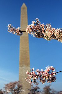 The Washington Monument - Washington, DC ... March 22, 2012 ... Photo by Rob Page III