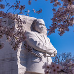 Martin Luther King, Jr. Memorial & Cherry Blossoms III