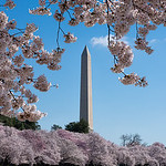 Cherry Blossoms & Washington Monument Peak [V2]