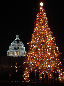 A Christmas Tree and the Capitol - Washington, DC ... December 10, 2005 ... Photo by Rob Page III