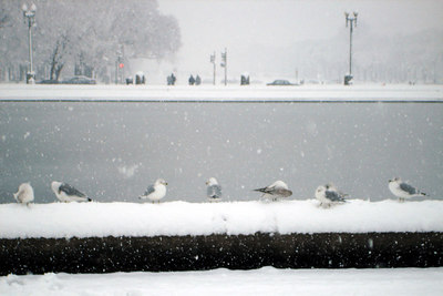 The Seagulls relax in the snow - Washington, DC ... February 24, 2007 ... Photo by Emily Conger