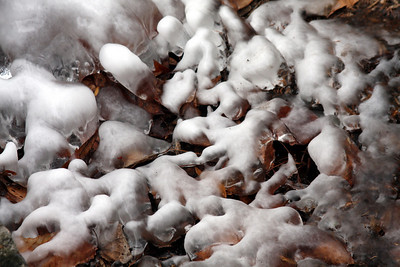The snow and ice on the leaves - Washington, DC ... January 18, 2009 ... Photo by Rob Page III