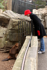 Emily and the beaver playing peek-a-boo - Washington, DC ... January 18, 2009 ... Photo by Rob Page III