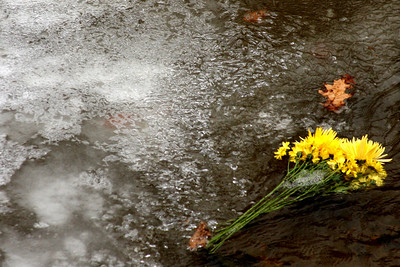 Flowers float in the icy river - Washington, DC ... January 18, 2009 ... Photo by Rob Page III