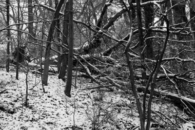 Winter in the woods - Washington, DC ... January 27, 2009 ... Photo by Rob Page III