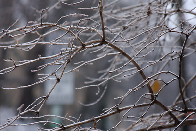 The branches coated in ice - Washington, DC ... January 28, 2009 ... Photo by Rob Page III