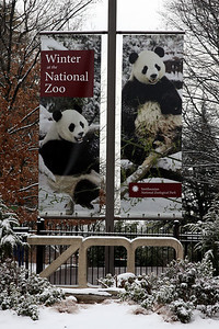 I tried to visit at winter time, but it was a little too slippery for them to allow guests - Washington, DC ... January 27, 2009 ... Photo by Rob Page III