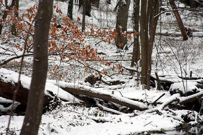 In the wintery forest - Washington, DC ... January 27, 2009 ... Photo by Rob Page III