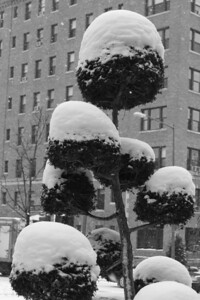 Snow platters - Washington, DC ... March 2, 2009 ... Photo by Rob Page III