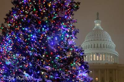 The Capitol Christmas Tree and the United States Capitol - Washington, DC ... December 19, 2009 ... Photo by Rob Page III