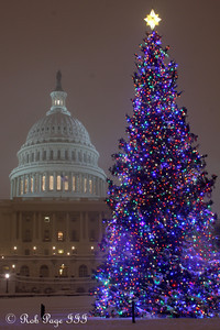 The Capitol Christmas tree in the great snowstorm - Washington, DC ... December 19, 2009 ... Photo by Rob Page III