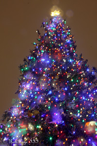 The Capitol Christmas Tree - Washington, DC ... December 19, 2009 ... Photo by Rob Page III