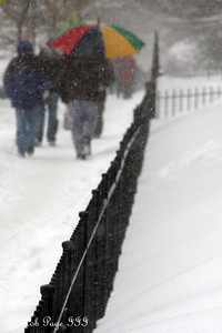 The snow comes down - Washington, DC ... December 19, 2009 ... Photo by Rob Page III