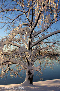 Cherry blossom trees along the Tidal Basin - Washington, DC ... February 7, 2010 ... Photo by Rob Page III
