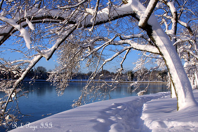 Snow-laden trees along the tidal basin - Washington, DC ... February 7, 2010 ... Photo by Rob Page III