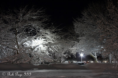 Snow covered trees outside the White House - Washington, DC ... February 7, 2010 ... Photo by Rob Page III