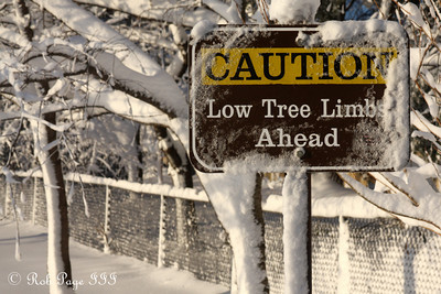 I almost missed this warning due to all the low hanging trees - Washington, DC ... February 7, 2010 ... Photo by Rob Page III