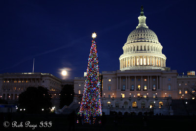 The Capitol Christmas Tree - Washington, DC ... December 9, 2011 ... Photo by Rob Page III