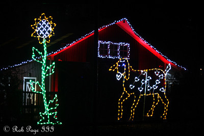 Out by the barn at Zoo Lights - Washington, DC ... January 1, 2012 ... Photo by Rob Page III