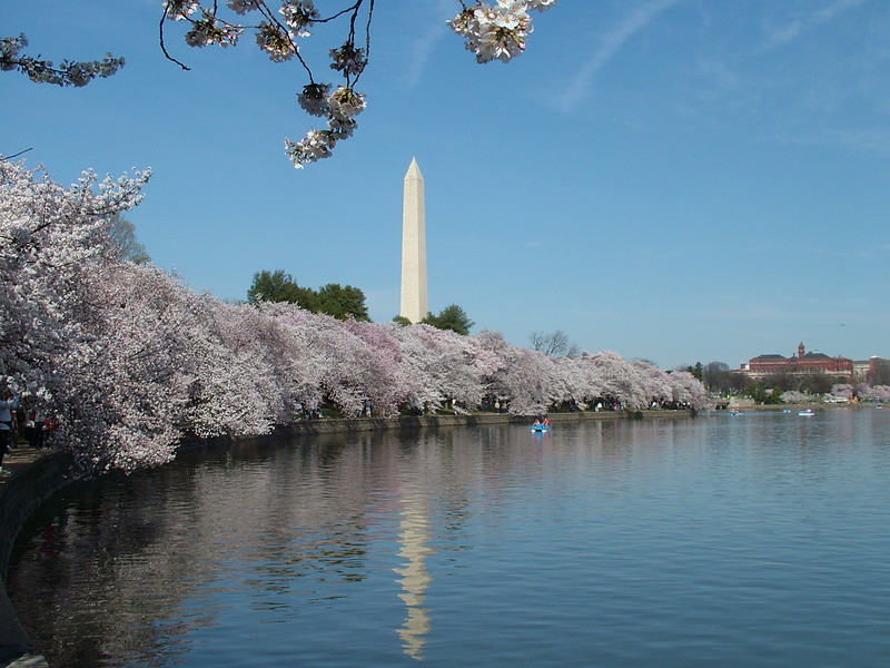 Washington Monument ~ Cherry Blossoms ~ Tidal Basin