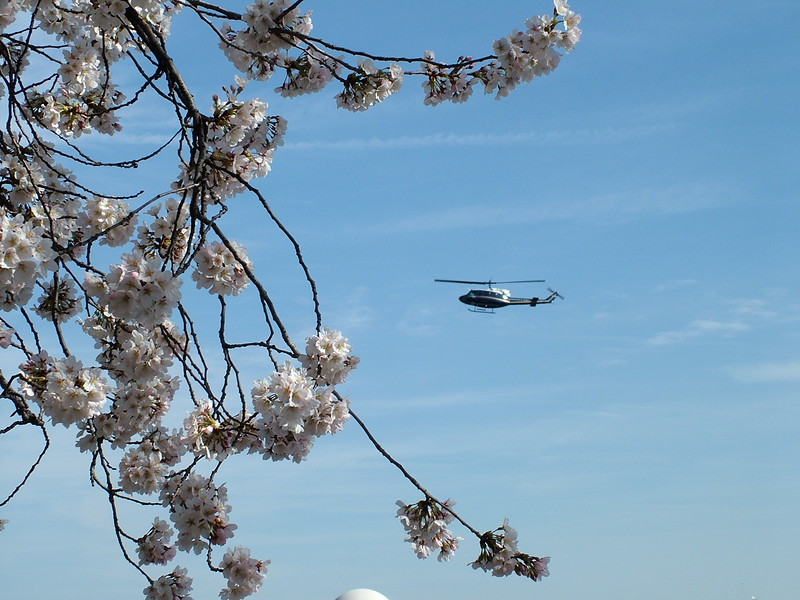 Fly over Tidal Basin ~ Washington DC