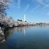Cherry Blossom time ~ Washington DC
