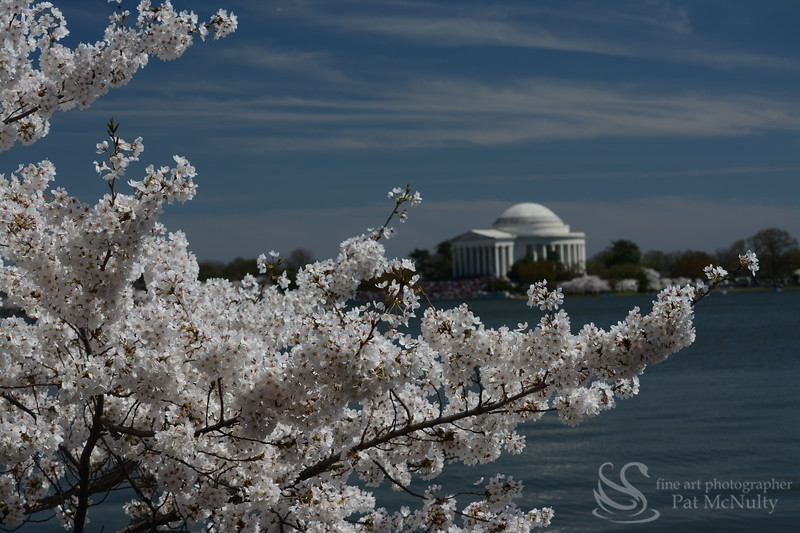 Washington Monument Cherry Blossom Picture