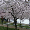 along Tidal Basin ~ Washington DC
