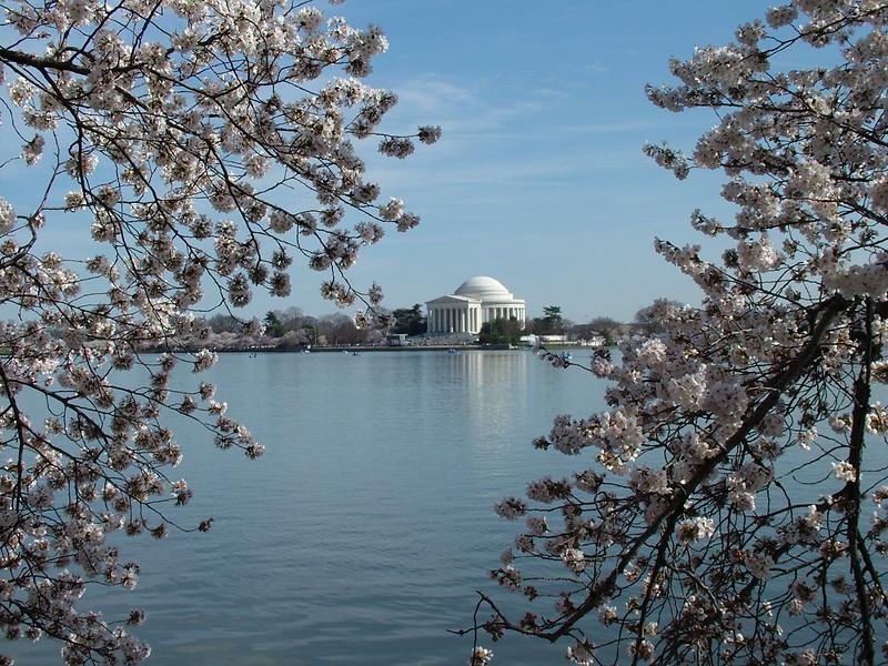Cherry Blossom ~ Jefferson Memorial ~ Washington DC