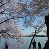 Tidal Basin ~ Washington DC