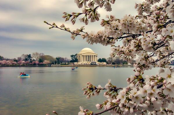 Jefferson Memorial Cherry Blossoms-Edit