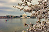 Jefferson Memorial Cherry Blossoms-Edit