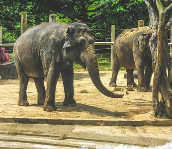 National Zoo Elephants