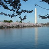 Washington Monument and Cherry Blossoms ~ Washington DC