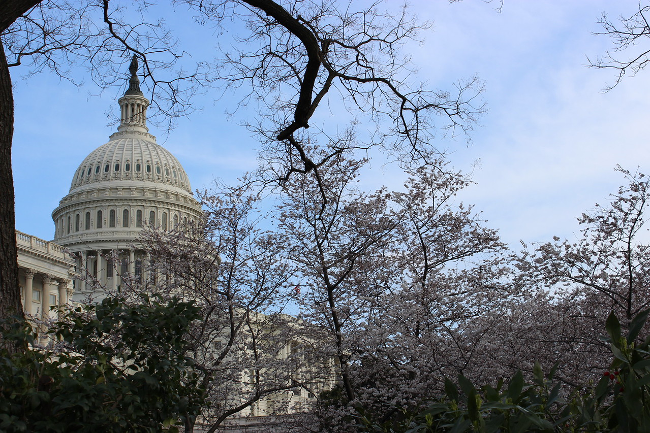 Signs of Spring at the Capitol