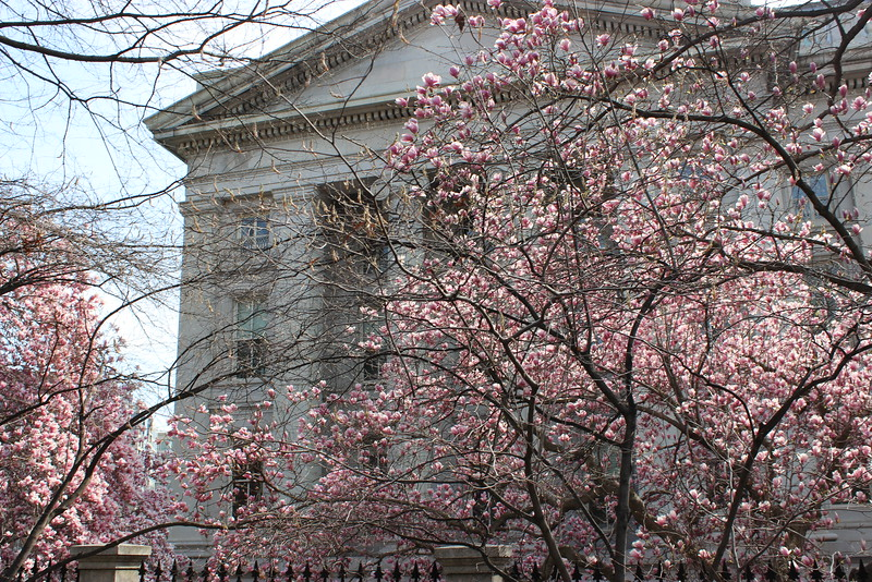 The Treasury Building in Springtime