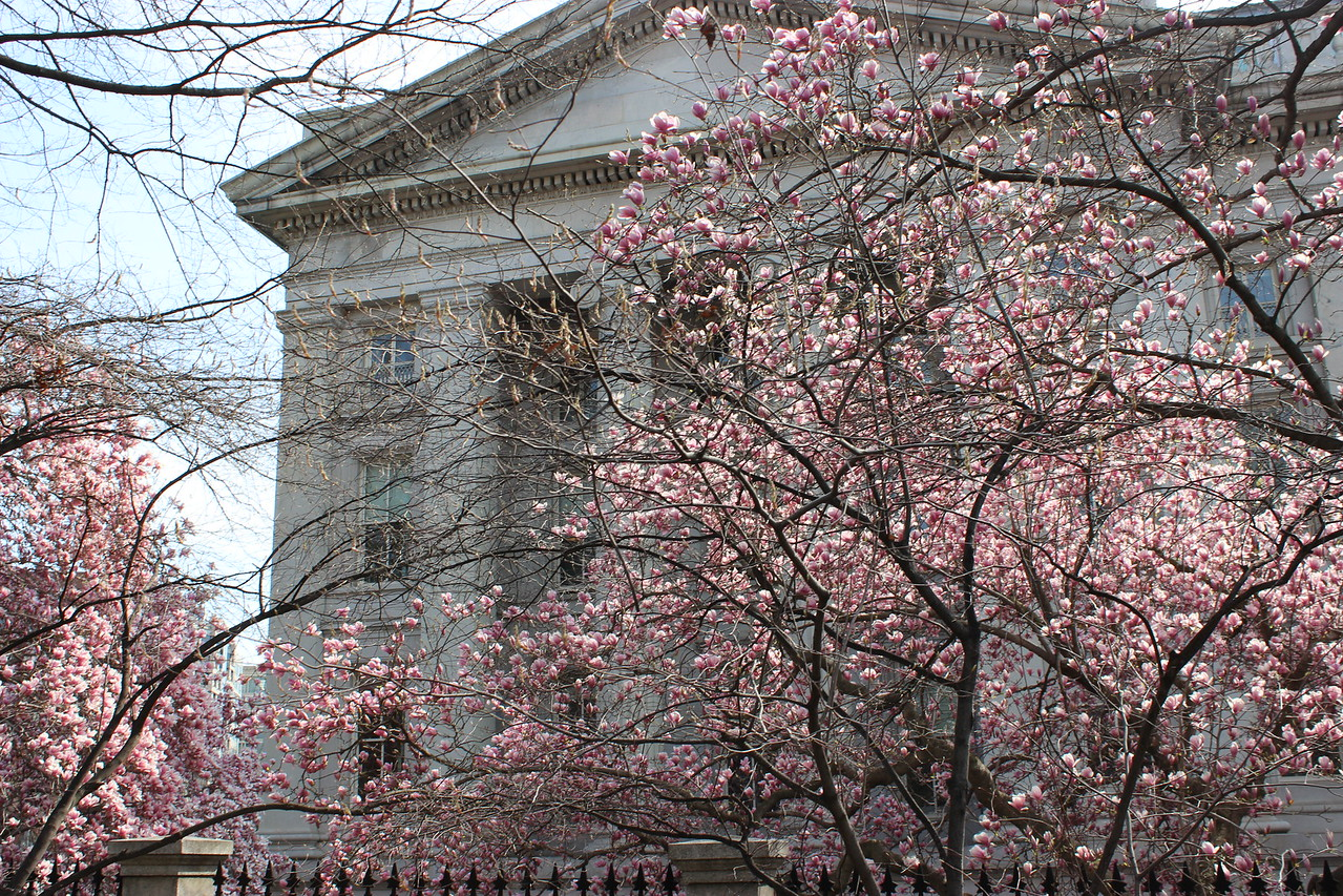 The Treasury Building in Springtime