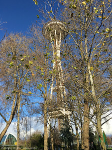 The Seattle Space Needle and Early December Trees