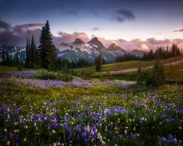 Mazama Ridge, Mt. Rainier