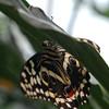 More strange tropical bugs.