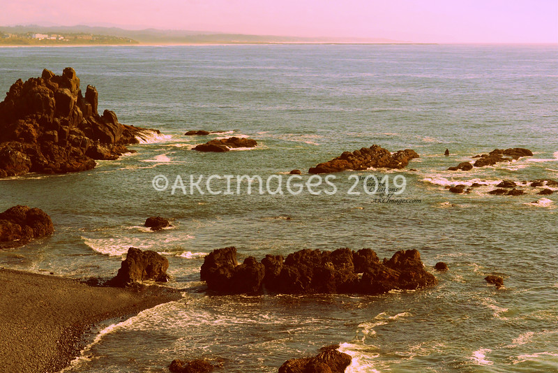 'Taking A Peak' (Grey Whale in the Yaquina Cove Newport, OR)