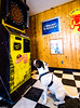 chelan-bar-dog-senjor-frogs-washington-darts-DSC_0097