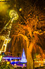 twisted-tree-DSC_0126