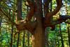 Tree-Twist-Beast-Mode-Olympic-National-Park-Second-Beach-LaPush-Wa-DSC_6925