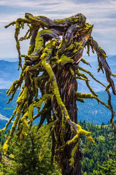 mossy-stump-garson-shortt-omak-pateros-eastern-wa-hiking-DSC_0163