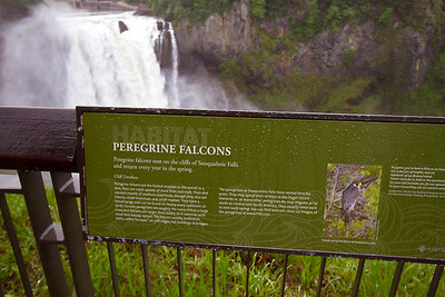 2 Peregrine Falcon sign at Snoqualmie Falls