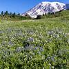 Mt. Rainier w/wildflowers.